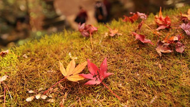 食欲の秋?いいえ、インスタグラムの秋!2016年秋におすすめしたいハッシュタグ20選