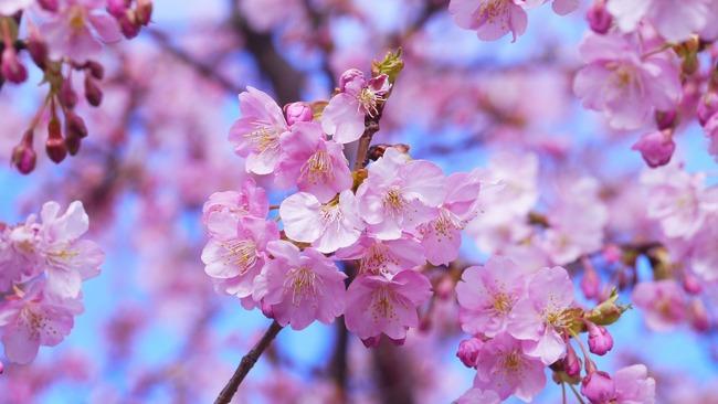 花より団子?花よりインスタグラム!春におすすめしたいハッシュタグ15選
